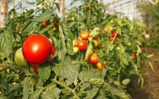 Особенности ухода за овощами в зимней теплице