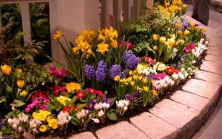 Первые весенние цветы фото и названия