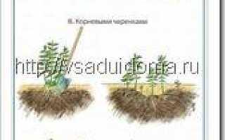 Флоксы метельчатые популярные сорта уход посадка размножение