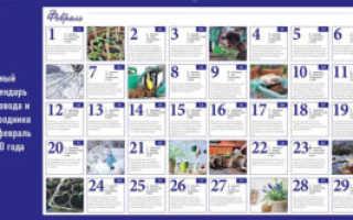 Лунный календарь садовода и огородника на февраль 2020 года