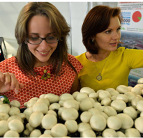 Бери грибы россиянам разрешат заработать на