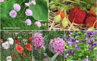 Какие растения любят кислую почву список