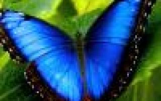 Летнее буйство многолетних цветов для сада