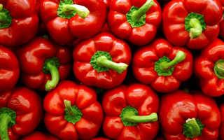 Вредители и болезни сладкого перца в теплице