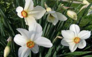Цветы белого цвета