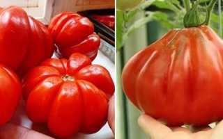 Лучшие урожайные сорта томатов для теплиц