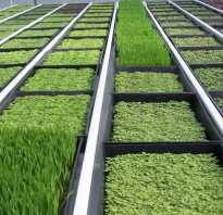 Выращивание зелени в теплицах