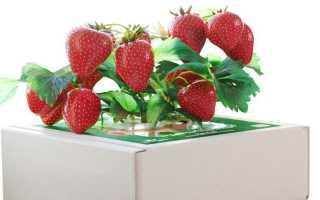 Что такое домашняя ягодница