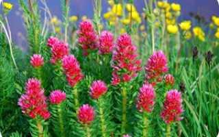 Какие цветы любят влагу