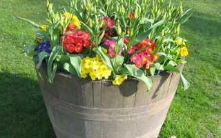 Полезные цветы для дома фото и названия