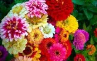 Однолетники цветущие в августе