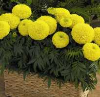 Балконные цветы фото и названия