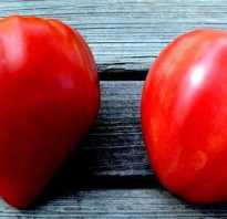 Самые лучшие сорта помидоров для теплицы