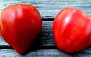 Самые урожайные помидоры для теплиц