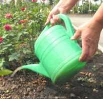 Подкормка роз органическими удобрениями
