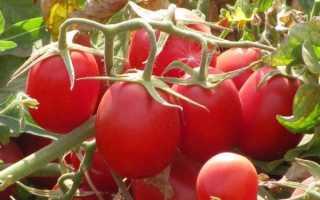 Штамбовые сорта томатов для теплиц