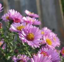 Основные цветы сентября