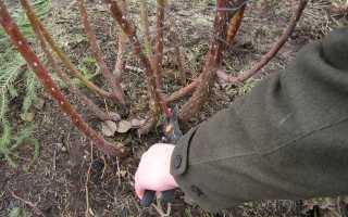 Что нужно знать для обрезки роз