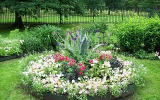 Как правильно посадить цветы на участке фото