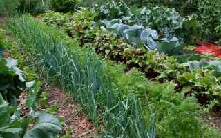 Применение нашатырного спирта в саду и огороде