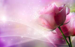 Польза настойки излепестков роз