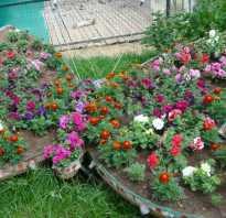 Декоративные цветы для клумбы фото и названия