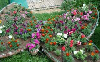 Какие растения растут на клумбе