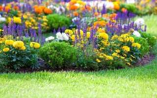 Как красиво посадить цветы на клумбе фото
