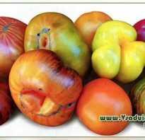 Лучшие американские сорта томатов