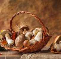 В каких условиях растут грибы