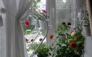 Популярные цветы в горшках