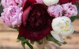 Как называются розы похожие на пионы