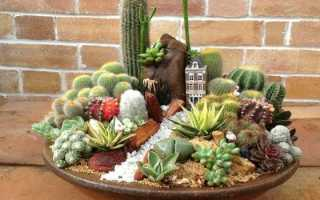 Мини сад из кактусов
