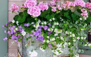 Свисающие цветы в горшках для сада