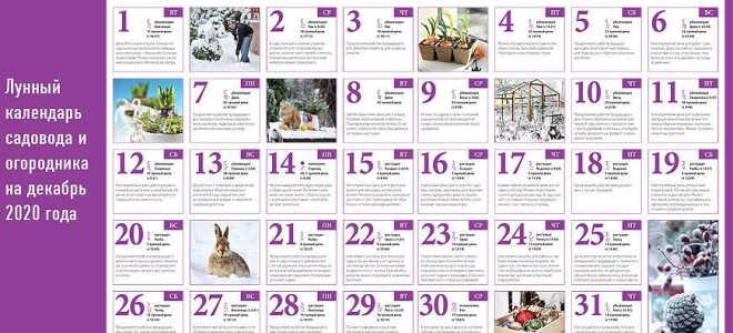 Лунный календарь садовода и огородника на декабрь 2020 года