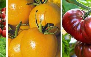 Лучшие сорта томатов для теплиц высокоурожайные и вкусные