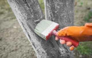 Чем белить деревья в саду осенью