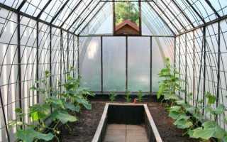 Огурцы выращивание и уход в парнике