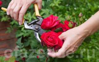 Правила обрезки роз