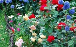 Наши лучшие сады энциклопедия роз