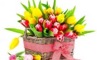 Тюльпаны сорта с фото и названиями