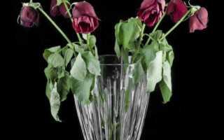 Розы повесили головы что делать