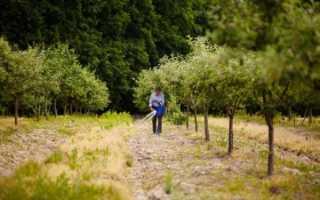 Чем подкормить взрослые яблони и груши осенью