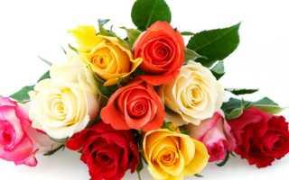 Топ 10 редких сортов роз