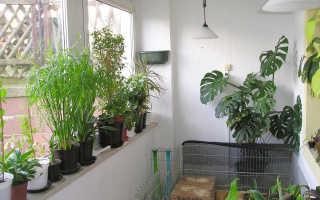 2 подбирайте цветы с учетом климата в квартире