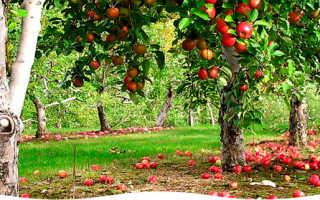Осенние удобрения для сада