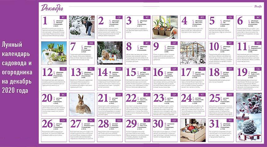 Лунный календарь садовода огородника на декабрь 2020
